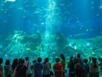 Coach Day Tour: Ocean Park Tour With Hotel Pickup in Hong Kong Island