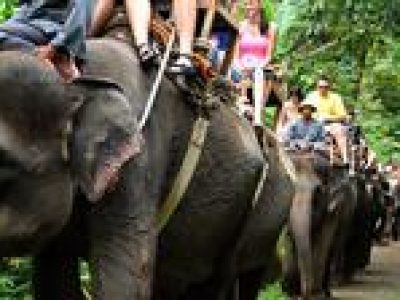 Elephant Safari Ride with Buffet Lunch in Taro