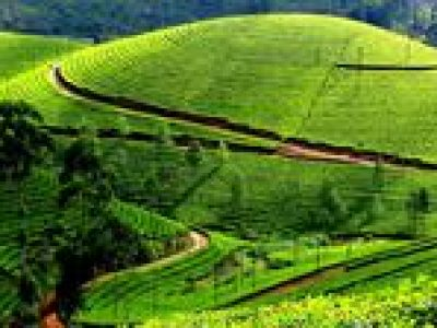 Private Day Trip to Munnar from Kochi (Cochin)