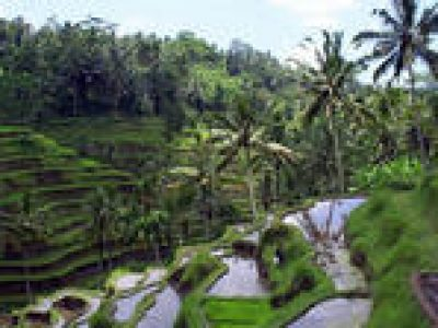 Private Tour: Ubud Sightseeing Tour